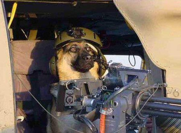 military-humor-funny-Beware-of-the-Dog-gun